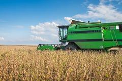 Harvesting soybean Royalty Free Stock Photo