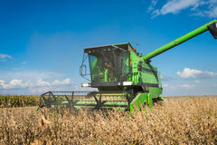 Harvesting soybean Royalty Free Stock Photography