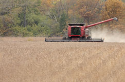 Harvesting Soybeans Royalty Free Stock Image