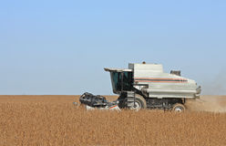 Harvesting Soybeans Royalty Free Stock Photos