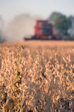 Harvesting soybeans Stock Photos