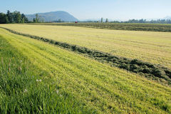 Harvesting Spring Hay Stock Photography