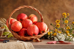 Harvesting and storing apples Stock Photography