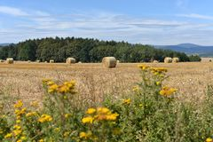 Harvesting of straw. Royalty Free Stock Photo