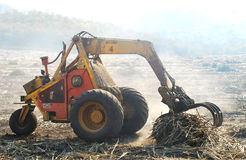 Harvesting sugar cane Royalty Free Stock Images