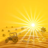 Harvesting on the sunny background. Vector illustration Stock Photos