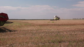 Harvesting. A sunny day. Two harvesters are harvesting crop of wheat stock video footage