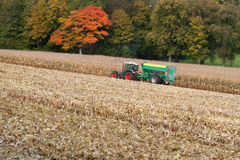 Harvesting sweetcorn Royalty Free Stock Images