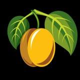 Harvesting symbol, single  fruit isolated. Ripe organic so Royalty Free Stock Photography