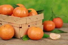 Harvesting tangerines Stock Photo