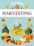 Harvesting. Thanksgiving Day. Stock Image