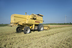 Harvesting and threshing rice in Italy Stock Images
