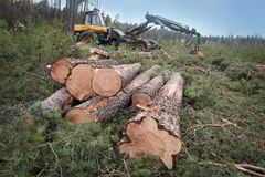 Harvesting timber Royalty Free Stock Images