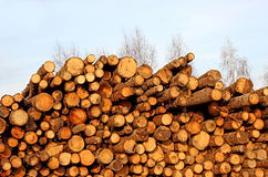 Harvesting timber logs in a forest Royalty Free Stock Photography