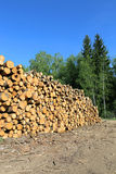 Harvesting timber logs in a forest Royalty Free Stock Image