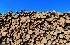 Harvesting timber logs Stock Image
