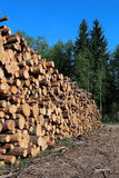 Harvesting timber logs Royalty Free Stock Image