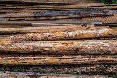 Harvesting timber logs Royalty Free Stock Image