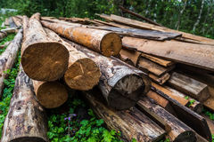 Harvesting timber logs Royalty Free Stock Photography