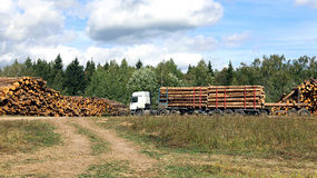 Harvesting timber logs in a forest in Russia Stock Photos