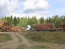 Harvesting timber logs in a forest in Russia. Transportation of logs on the big timber carrier stock video