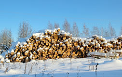 Harvesting timber logs in a forest in Russia Royalty Free Stock Images