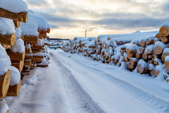 Harvesting timber logs in forest in Russia in winter Royalty Free Stock Image