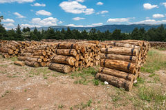 Harvesting timber logs in a forest Royalty Free Stock Photo
