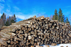 Harvesting timber logs in a forest in winter Royalty Free Stock Photos