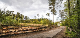 Harvesting timber Royalty Free Stock Image