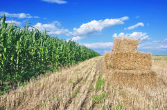 Harvesting time Royalty Free Stock Photography