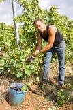 Harvesting time Stock Photo