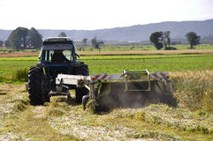 Harvesting triticale for silage Stock Photos