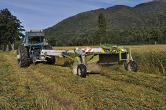 Harvesting triticale for silage Royalty Free Stock Image