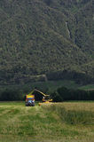 Harvesting triticale for silage Royalty Free Stock Photos