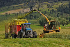 Harvesting triticale for silage Royalty Free Stock Images