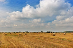 Harvesting is by a warm day in August. Harvesting by a warm day royalty free stock photography