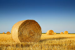 After harvesting of weat grain. In summer Royalty Free Stock Photos