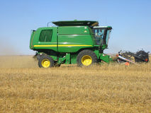 Harvesting wheat. In Saskatchewan Royalty Free Stock Photography