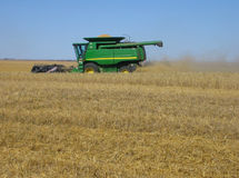 Harvesting wheat royalty free stock photo