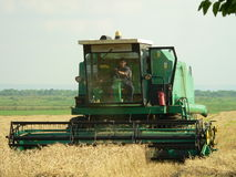 Harvesting the wheat. On summer royalty free stock image
