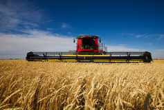 Harvesting wheat Royalty Free Stock Photos