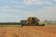 Harvesting wheat on the Canterbury plains Stock Photo