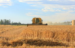 Harvesting wheat on the Canterbury plains Stock Photos
