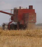 Harvesting Wheat Cereals. Harvester in action on wheat field Royalty Free Stock Photos