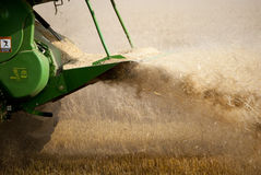 Harvesting Wheat. Chaff from harvester blowing out Royalty Free Stock Image