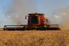 Harvesting Wheat Royalty Free Stock Photography