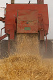 Harvesting Wheat. Combine harvesting wheat on field Royalty Free Stock Images