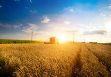Harvesting wheat Royalty Free Stock Photos