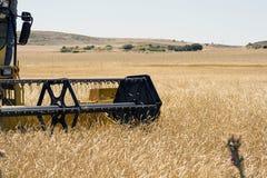 Harvesting Wheat, detail Royalty Free Stock Photo